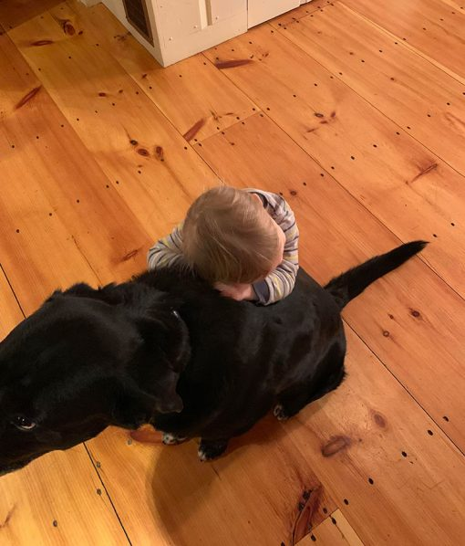 Wide Pine Plank Flooring with dog and baby