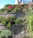 retaining-wall-vineyard-blend-cape-cod