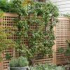 lattice garden fence