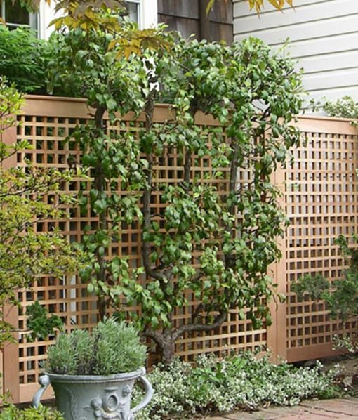 lattice garden fence